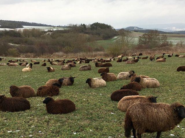 Halbzeit: Decke aus Schafwolle II Teil 12 mit Wolle vom grauen Rhönschaf