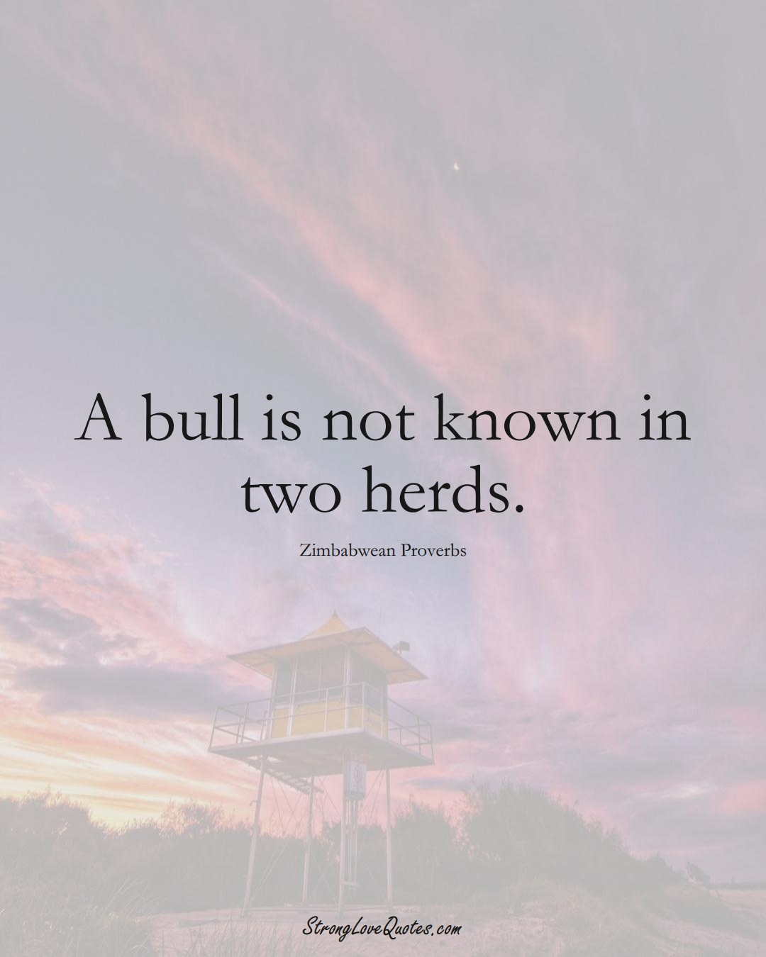 A bull is not known in two herds. (Zimbabwean Sayings);  #AfricanSayings
