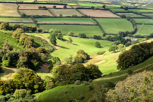 Trees and fields in the Punchbowl at Exmoor in Somerset by Martyn Ferry Photography
