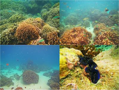 diving pulau menjangan bali