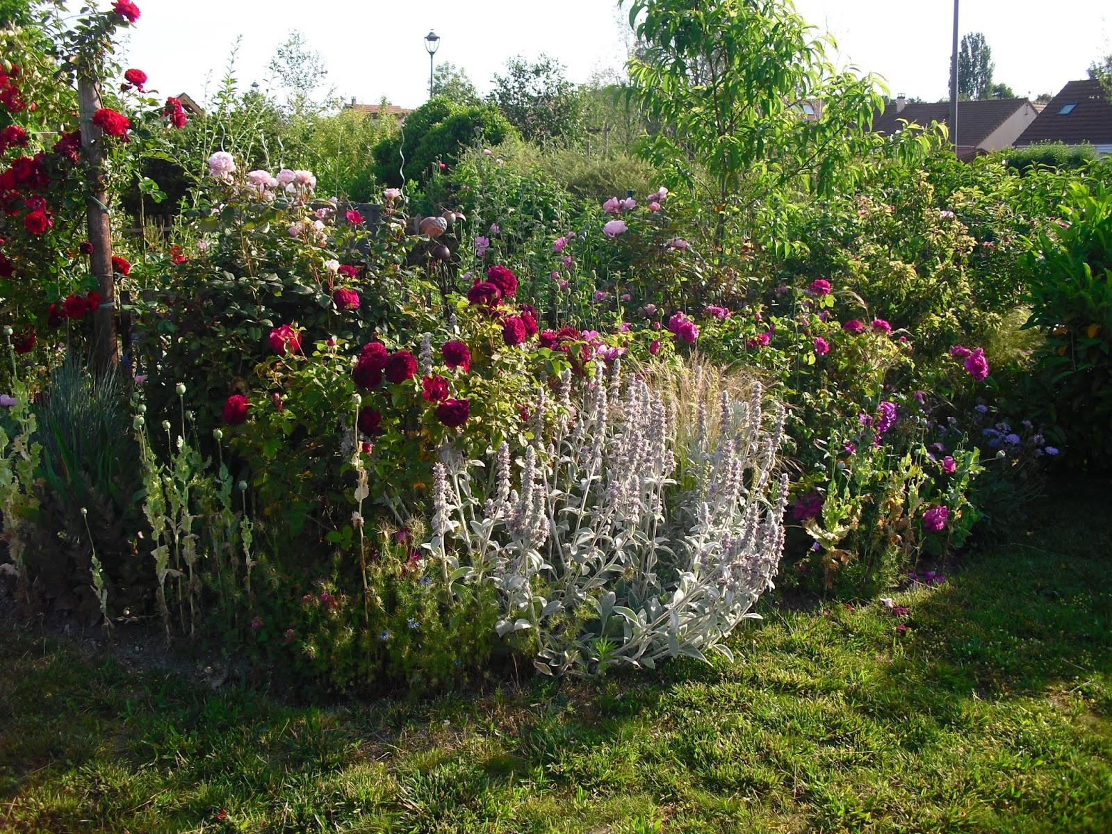 Mon petit jardin en Sologne: Le massif Invincibelle avant la ...