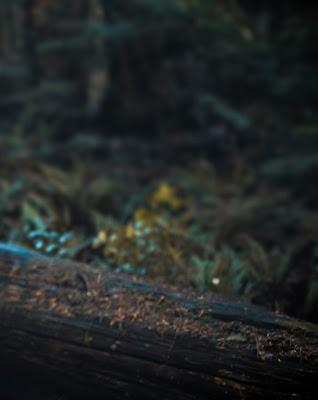 Best Nature Dark Blur Background Free Stock Photo