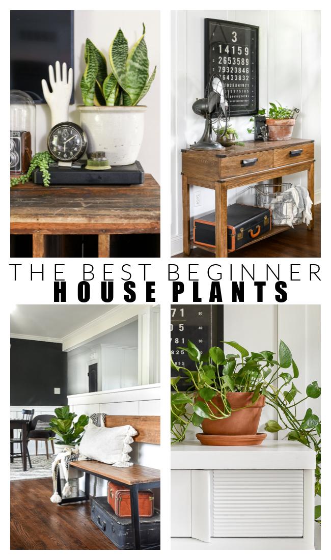 The best low maintenance house plants