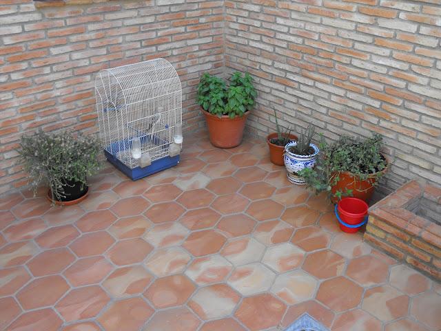 suelo de barro hexagonal y ladrillo taco con pileta y moldura.