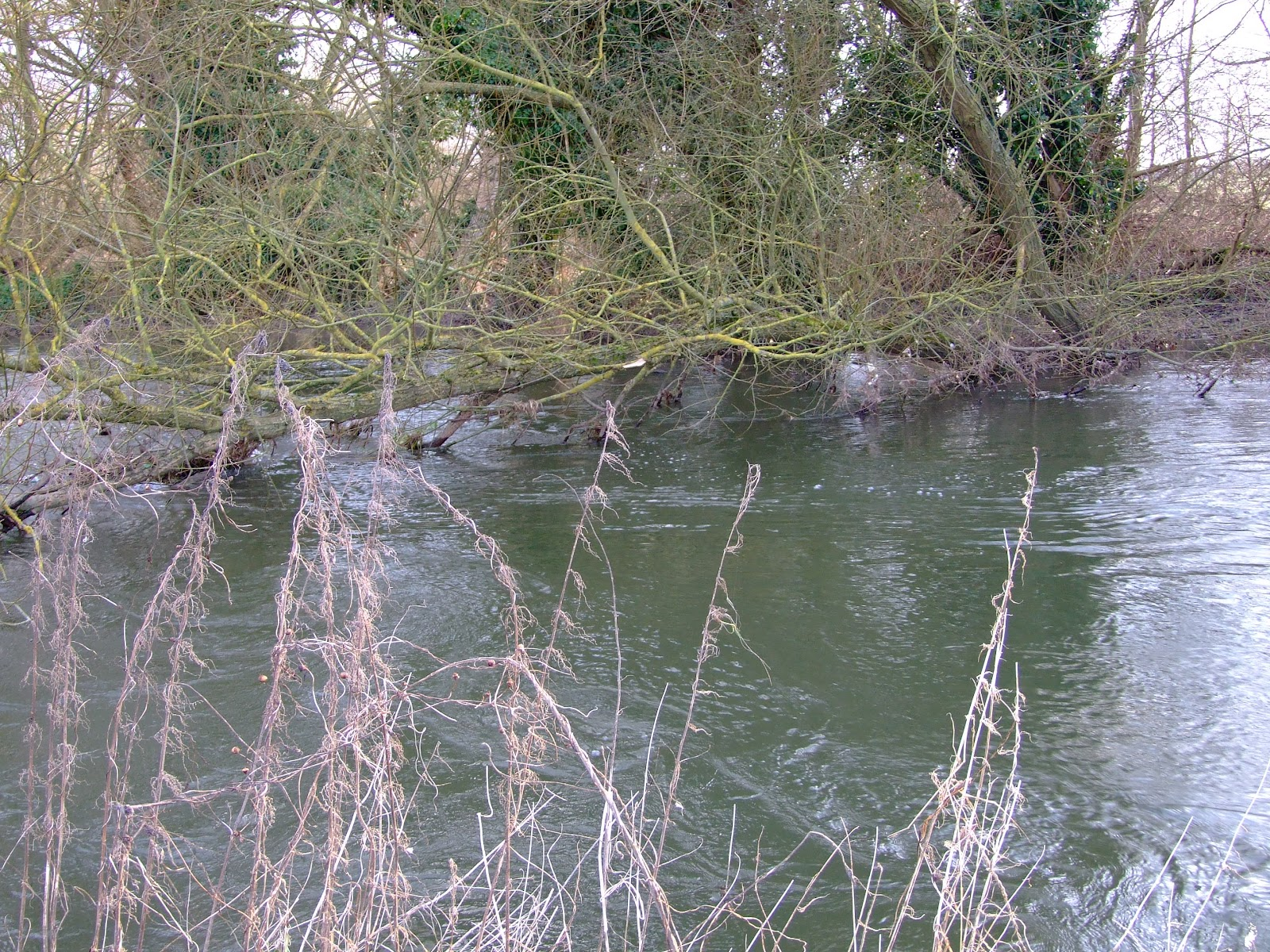 Canoeing and Kayaking on The River Kennet: Paddling past ...