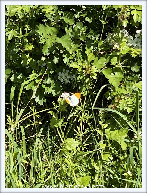 Lovely Butterflies ©BionicBasil® The Pet Parade 351