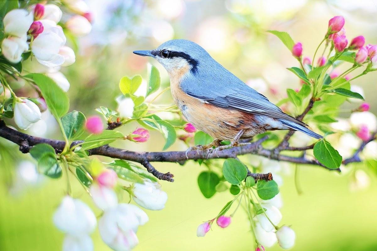 Download Wallpaper bird in tree trunk