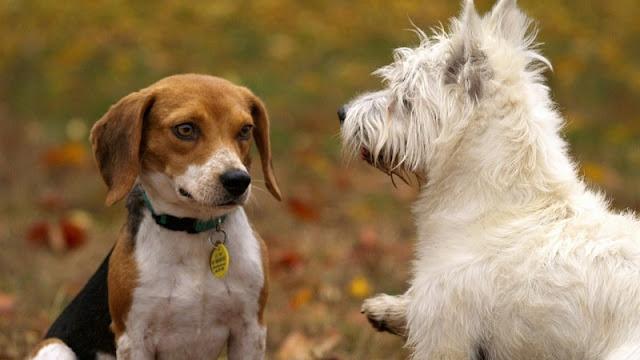 dua ekor anjing sedang bersosialisasi di taman