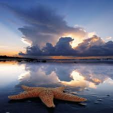 Bir Deniz Yıldızı Hikayesi 4