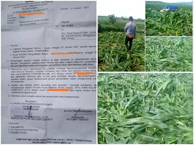 Laporkan Pelaku Pengerusakan Jagung Di Desa Suka Damai, Rusni Pemilik Jagung Minta Keadilan Hukum
