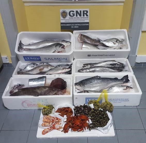 OPERAÇÃO. GNR confisca 78 quilos de pescado no Mercado de Cascais