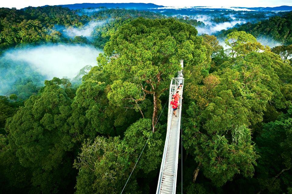 Облачный лес Монтеверде в Коста-Рике