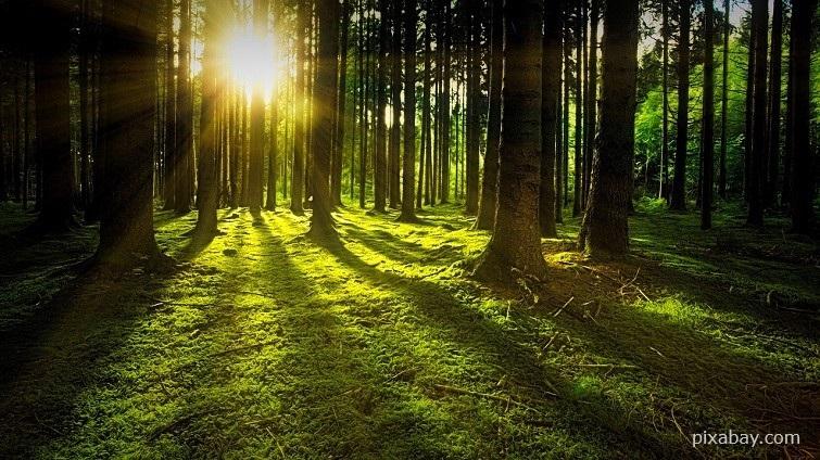 Waldbaden für inneren Frieden