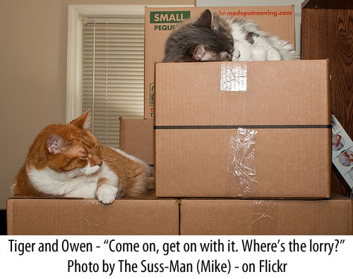 Moving home with a cat