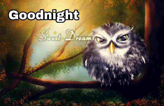owl Good Night Image