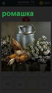 Бидон с початкми кукурузы и букеты с ромашкой, лежащие на поверхности стола