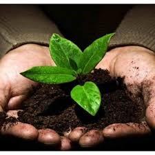 التربة Soil
