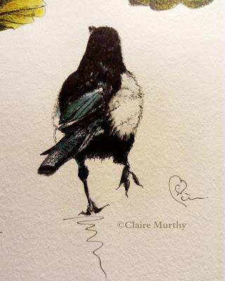 Watercolour artist Birds bird paintings