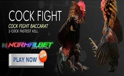 Ayam Bk