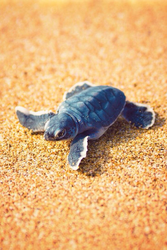 20 Of the Beautiful and Cute   Baby Sea Turtle   Pictures ...