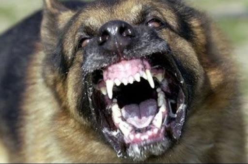 عاجل : هذه حقيقة وفاة الطفل الصغير الذي نهشته الكلاب الضالة ضواحي أكادير