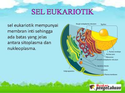 Penjelasan Detil Tentang Sel Eukariotik
