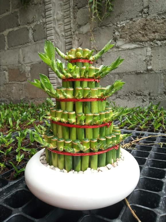 Bambu Hoki 5 susun pagoda susun 5 Kalimantan Timur