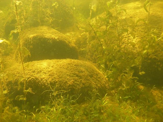 Kiviä ja kasvillisuutta veden alla