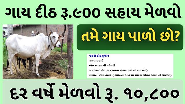 Aatmnirbhar Gujarat Sahay Package Cow Sahay Per Month Rs 900