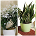 Get One Of This Plants To Generate Oxygen At Night In Your Bedroom Read And Be Amazed!