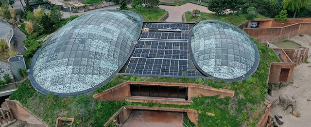 Copenhagen ZOO protects its species with the power of the sun – powered by Hanwha Q CELLS