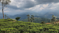 tea states,tea,dolosbage,srilanka