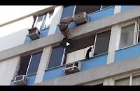 Drammatico salvataggio di un gatto a Rio de Janeiro