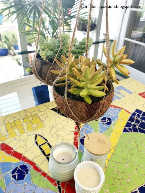 Coconut Succulent Hanging Planters