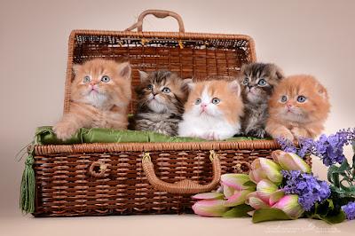 http://lalellecats.blogspot.com/p/blog-page_20.html