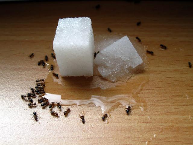 Geram semut asyik naik ke meja? Meh cuba petua ni.