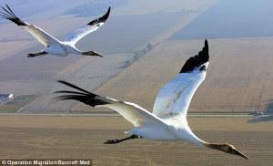Ketinggian Penerbangan dari Migrasi Burung