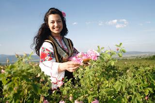 hame made shampoo from bulgarian rose hair powder