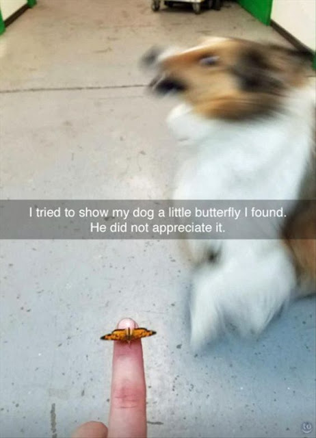 funny dogs, blurry dog, hilarious dog photos
