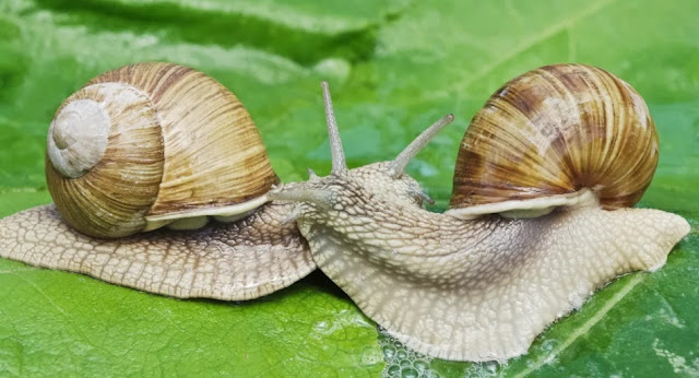 It turns out that snail mucus is beneficial for skin health
