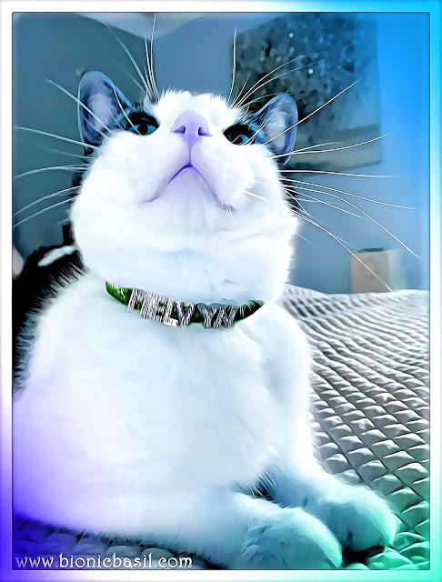Melvyn's Posh Selfie ©BionicBasil® Caturday Art Hop