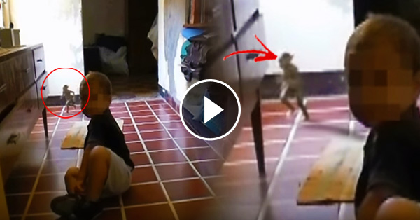 Think, dwarf caught on camera can help