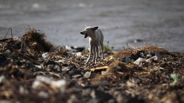 Una peligrosa alga de agua dulce está matando mascotas en EE.UU. y el cambio climático puede empeorar la situación