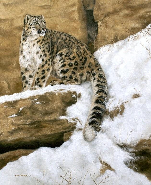 06-Snow-Leopard-Sarah-Stribbling-A-Wildlife-and-Pet-Portrait-Artist-www-designstack-co