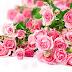 Giáo án mầm non mùa bái hát Bông hoa mừng cô