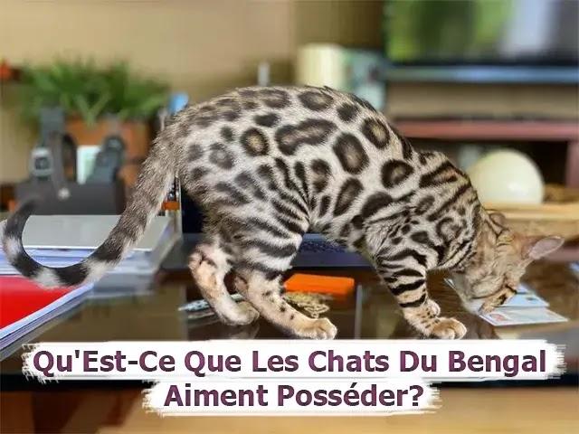 Qu'Est-Ce Que Les Chats Du Bengal Aiment Posséder?
