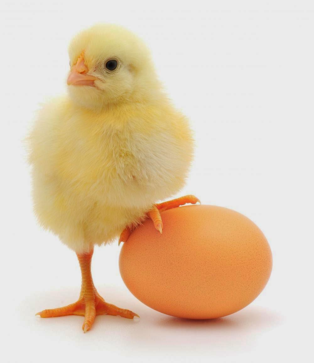 consejos de belleza con huevo