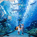 Get Acquainted with the Largest Aquariums in the World