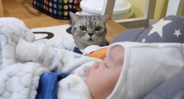 Cat Meets His New Baby Brother For The First Time, And We Can't Get Enough Of His Reaction
