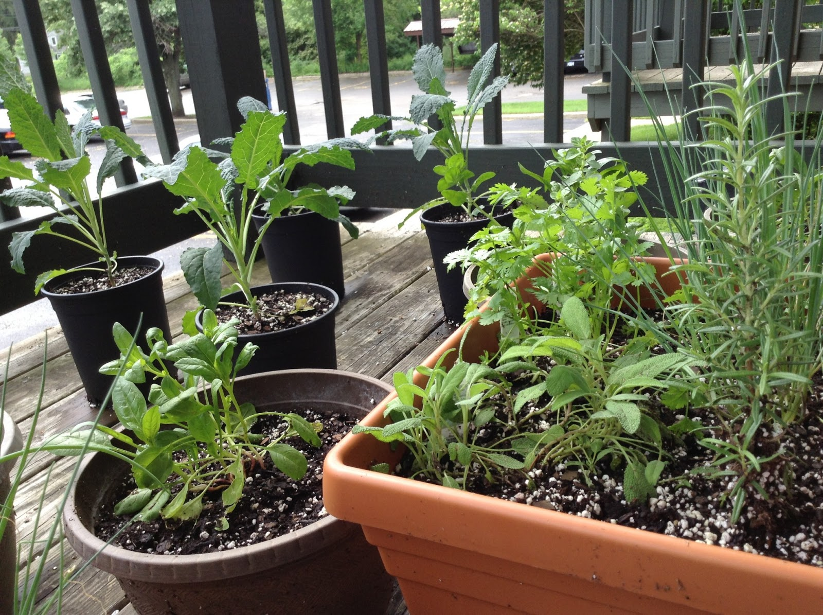 Starting a Balcony Herb Garden Richly Rooted